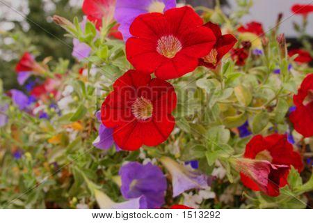 Plant Bloom