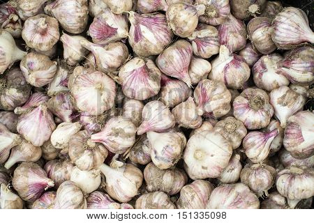 Fresh bulbs of garlic from the recent harvest. Background.