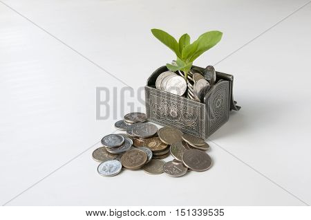 Near an open chest with coins and plant lie rubles