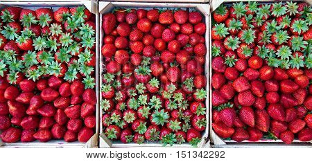 Strawberries in boxes. Beautifully laid for sale.