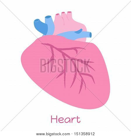 Heart illustration in flat style. Viscera icon internal organs.