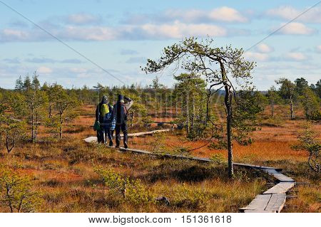 People hiking on a colorful autumn bog.