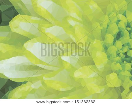 Low poly illustration Close up of lime green abstract Chrysanthemum Flower