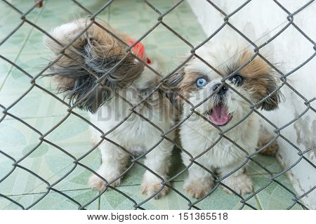 Puppy Dog in cage And have poor eyesight.