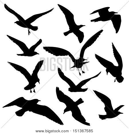 Flying birds black silhouettes vector set. Dove and hawk, eagle and seagull illustration