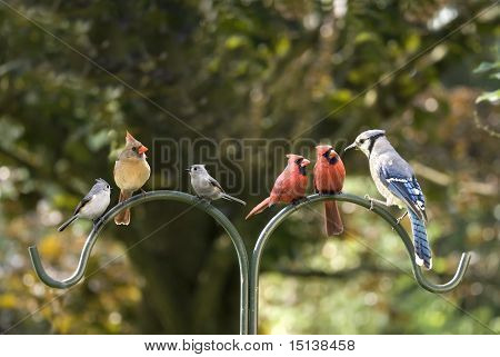 Bird Diversity Meeting