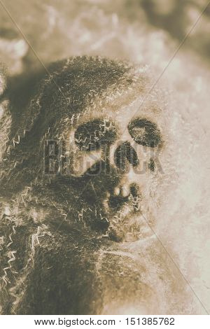 Creepy halloween horror background on a old zombie skull nattering in deadly chatter. Webs and dead heads