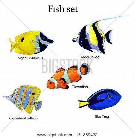 illustration fish set vector,  fish vector,  tropical fishes