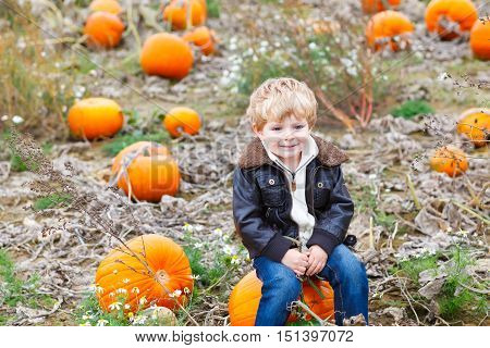 Little toddler kid boy with big orange pumpkins on field or patch. cute child in fashion clothes having fun with huge vegetable. Traditional thanksgiving or halloween