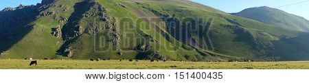 Panorama Of Mountains And Cows