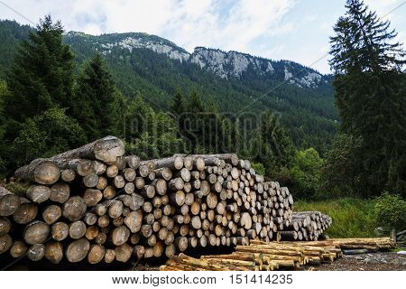 pile of wood near a forest in Alps