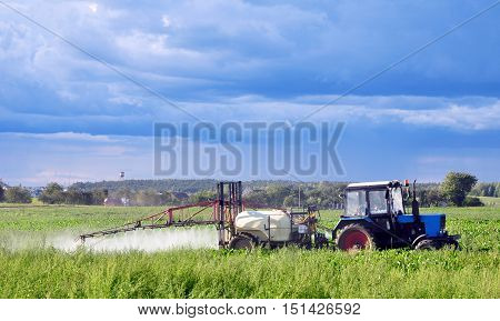 Grodno, Belarus - August 15, 2016: Green agricultural field in Belarus with a beet and a tractor watering and spraying fertilizer on a background of blue sky.