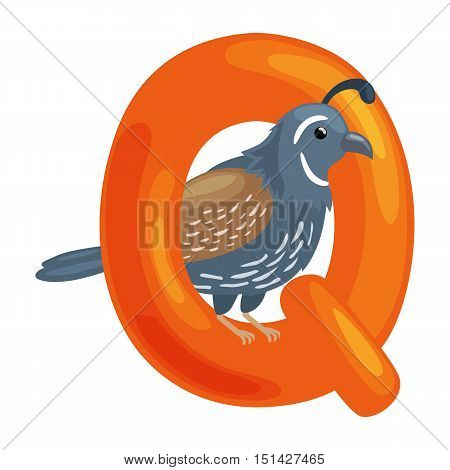 quail animal and letter Q for kids abc education in preschool.Cute animals letters english alphabet. Cartoon animals alphabet for learning letters vector illustration. Single letter with wild animal quail
