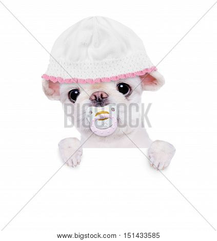 Cute little puppy chewing pacifier, behind the white banner.