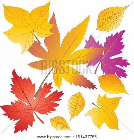 Autumn leaves pattern. Abstract Autumn background. Fall leaf. Fall season leaves. Maple leaf set. Vector illustration. Hand drawn.