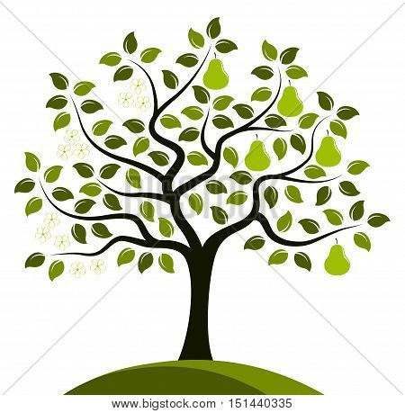 vector pear tree in two seasons isolated on white background