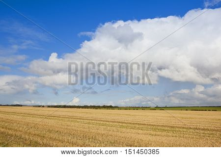 Big Sky And Straw Stubble