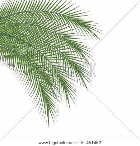 Branches of palm trees on a white background vector illustration