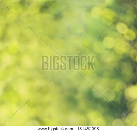Abstract Green Background with Greenery Foliage Glitter. Spring or Summer Background