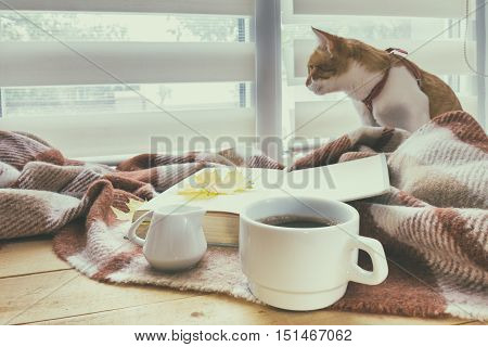 Cup of coffee book with autumn yellow leaf and red-white cat surrounded wool blanket on windowsill. Coloring and processing photos in vintage style with soft selective focus.