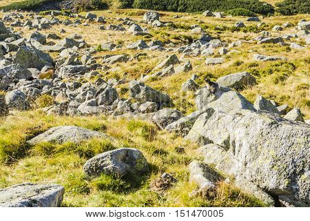 Marmot Sitting On A Boulder.