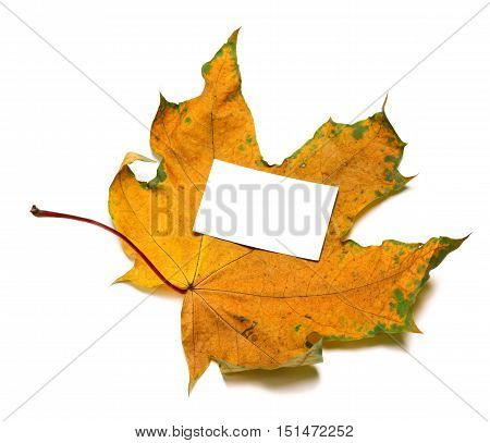 Autumnal Dried Maple-leaf With White Empty Price Card