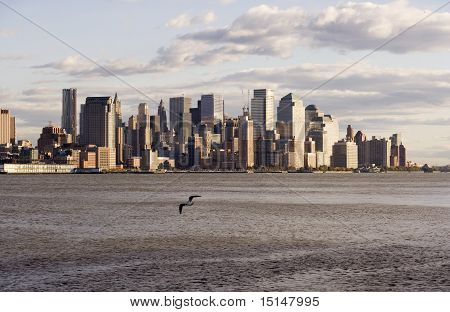 Downtown Nyc With Seagull