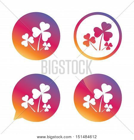 Clovers with three leaves sign icon. Saint Patrick trefoil shamrock symbol. Gradient buttons with flat icon. Speech bubble sign. Vector