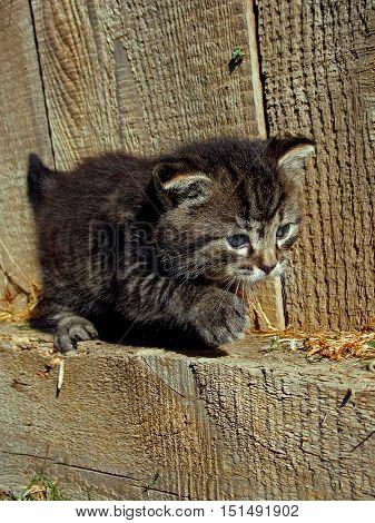 little disobedient kitty in garden way .