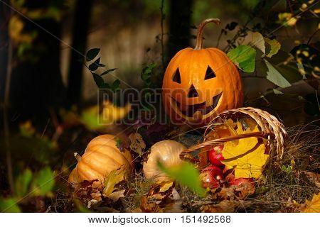 Halloween Pumpkin in the forest on a dark background.
