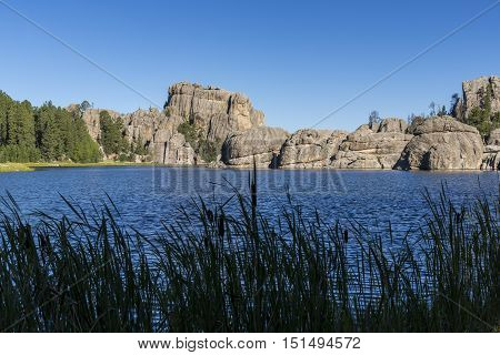 A scenic lake in the Black Hills.