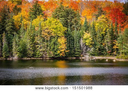 Colorful fall trees on the lake with reflection