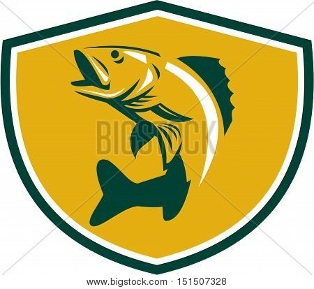 Illustration of a Walleye (Sander vitreus formerly Stizostedion vitreum) a freshwater perciform fish jumping up viewed from the side set inside shield crest on isolated background done in retro style.