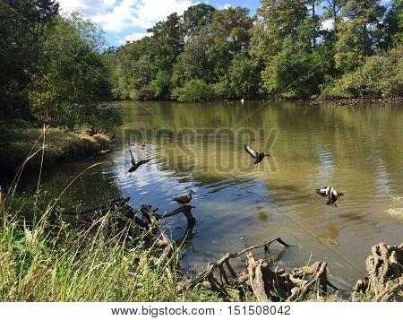 Popular Audubon Park In New Orleans, Louisiana.