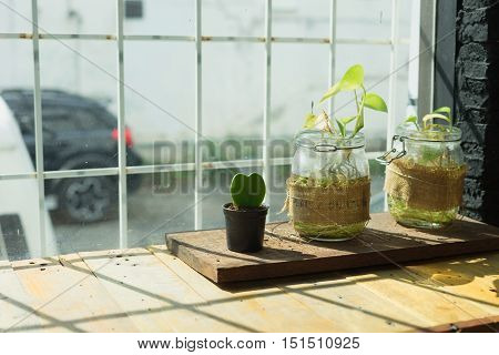 Small cactus plant sun light in black flower pot green plant in glass pot on mirror wall background wooden table /Small plant in flower pot