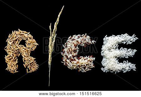 Alphabet letter from rice plant paddy seed brown rice white (jasmine) rice. Dark background.
