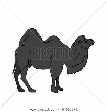 Black silhouette Camel in Walking pose isolated on white background. Vector illustration