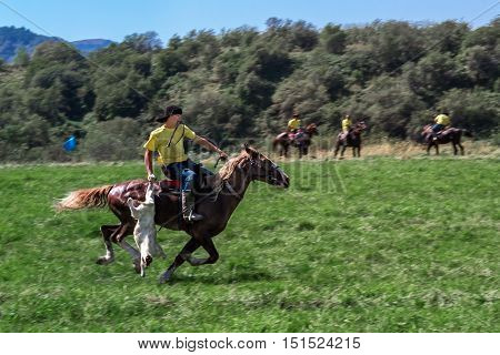 rider galloping on a horse with a goat carcass. Kazakh national game riding - kokpar