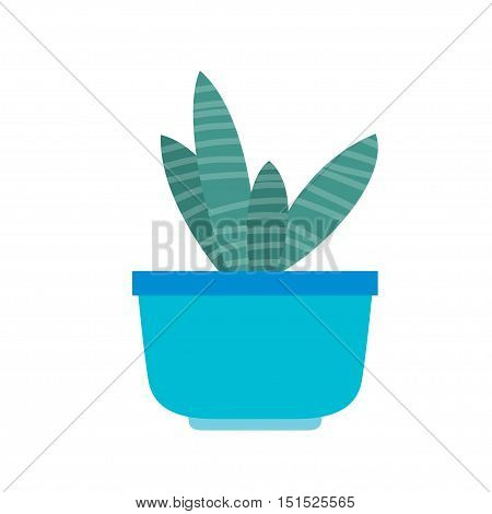 The indoor flower plant in a blue pot on a white background. Vector illustration