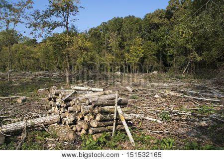 Deforestation environmental damage destruction of oak forest in Serbia