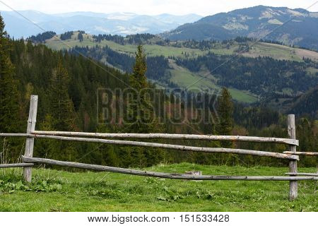 Spring forest on mountain slopes