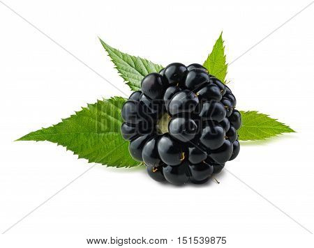Blackberry. Ripe fresh blackberry isolated on white background with green leaves behind berry.
