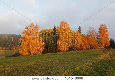 Image of the trees in autumn - colorful autumn