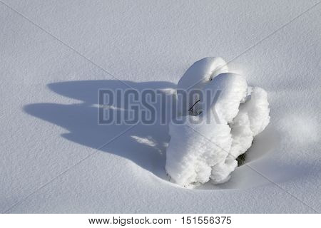 Branch of a small fir-tree covered with snow