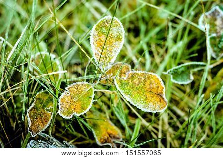 plants in the autumn morning covered with thaw