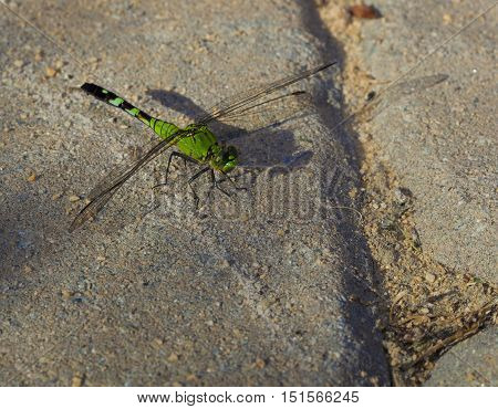Dragonfly that has landed on some sand set bricks