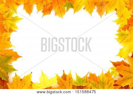 Frame out of real natural autumn chestnut tree leaves isolated on white background.