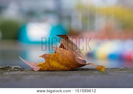 Close up of a dried leaf in fall