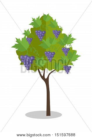 Purple grapes hanging on a bush. Vineyard icon. Vineyard grape. Wine grapes in vineyard ready for harvest. Grape bush icon. Ripe purple grapes with shadow. Vector illustration on white background.