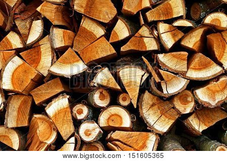 A detail on some wooden logs in a forest